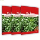 Stevia seeds  - 10 Packets
